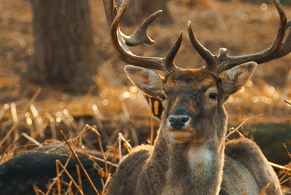 Oh my deer – 5D Mark III Raw