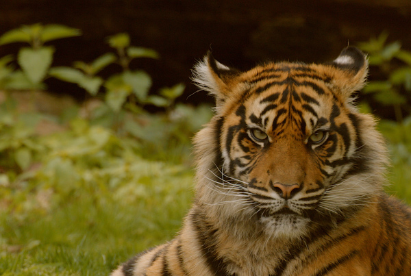 A day at the Zoo – Burgers Zoo Arnheim